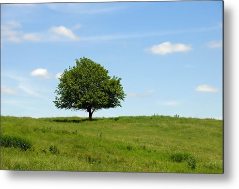 Tree Metal Print featuring the photograph Loner by David Arment