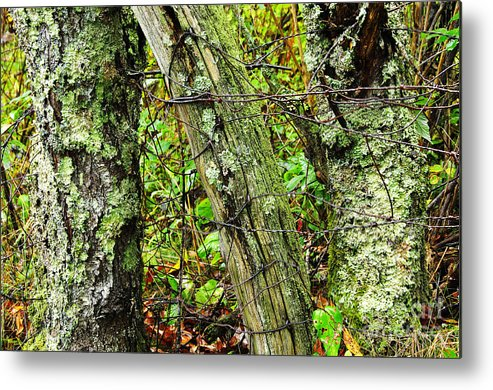 Ancient Metal Print featuring the photograph Long Ago Fence by Thomas R Fletcher