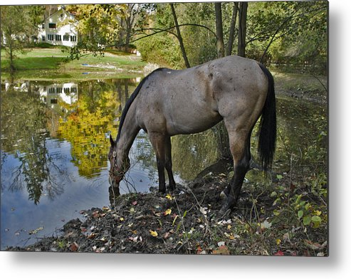 Horse Metal Print featuring the photograph Long Drink by Jack Goldberg