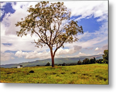 Recent Metal Print featuring the photograph Long Tree Shenandoah Valley West Virginia by Geraldine Scull