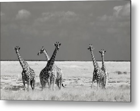 Nature Metal Print featuring the photograph Look Girl Strange Animals by Mathilde Guillemot