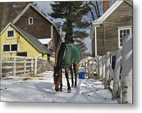 Horse Metal Print featuring the photograph Looking For Stray Hay by Jack Goldberg