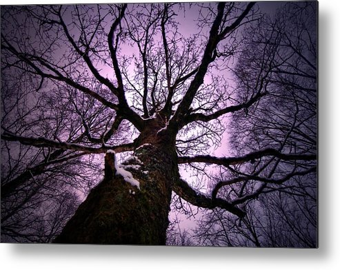 Wales Metal Print featuring the photograph Looking Up. by Richard Outram