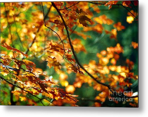 Fall Color Metal Print featuring the photograph Lost In Leaves by Kathy McClure