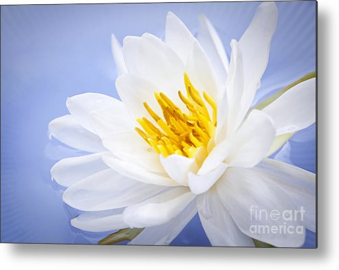 Lotus Metal Print featuring the photograph Lotus Flower by Elena Elisseeva