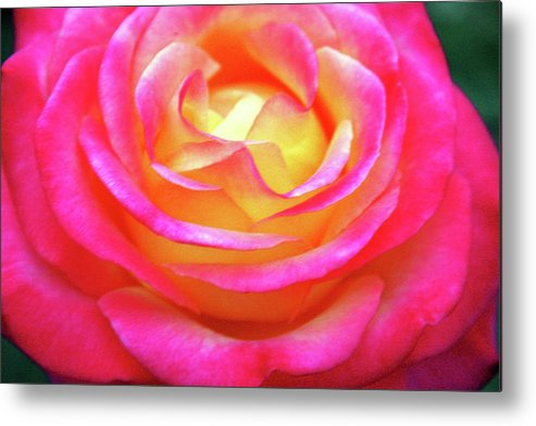 Flower Metal Print featuring the photograph Love In Bloom by Annee Olden