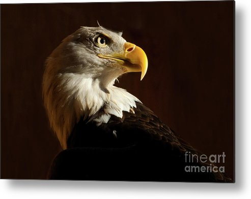 Wild Birds Metal Print featuring the photograph Luc by Henry Russell