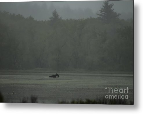 Maine Metal Print featuring the photograph Maine by David Rucker