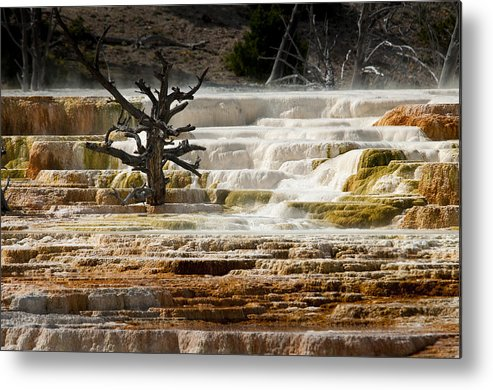 Mammoth Hot Springs Metal Print featuring the photograph Mammoth Hot Springs Beauty by Chad Davis