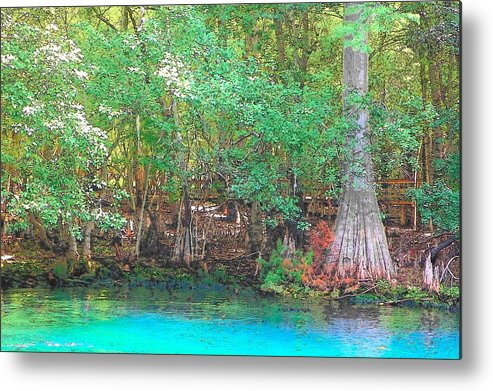 Manatee Springs Chiefland Florida Metal Print featuring the photograph Manatee Springs Toon I by Sheri McLeroy