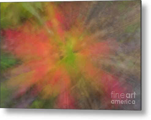 Tree Metal Print featuring the photograph Maple Leaf Nebula by Wes Boyce
