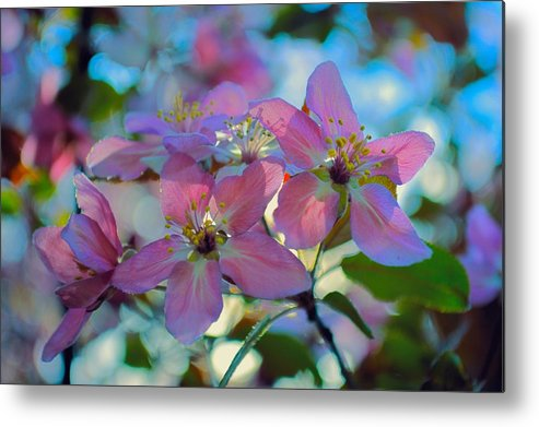 Crab Metal Print featuring the photograph May Pastels by Bonfire Photography
