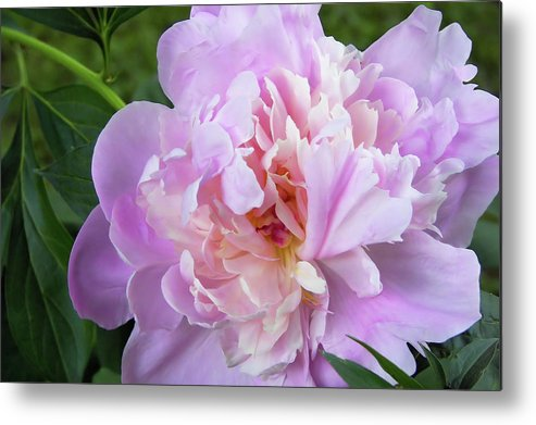 Flower Metal Print featuring the photograph Melissa's Flower by JAMART Photography