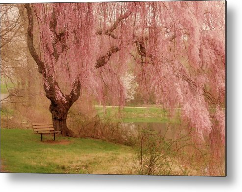 Cherry Blossom Trees Metal Print featuring the photograph Memories - Holmdel Park by Angie Tirado