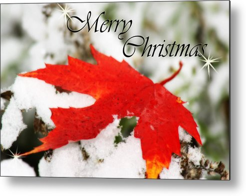 Christmas Card Metal Print featuring the photograph Merry Christmas Leaf by Cathy Beharriell