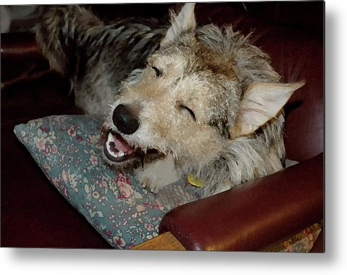 Dogs Metal Print featuring the photograph Merry Mikey by Ross Powell