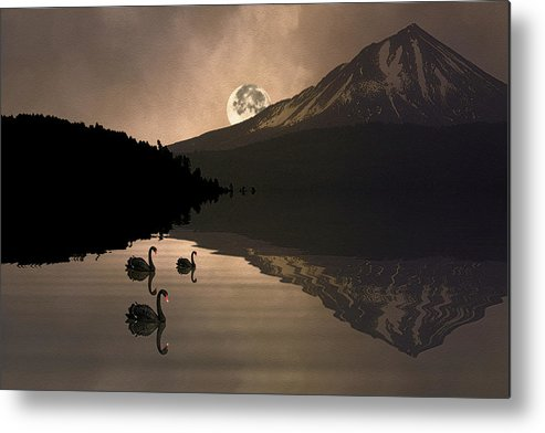 Swans Metal Print featuring the photograph Midnight Moods Swan Lake In The Moonlight by Diane Schuster