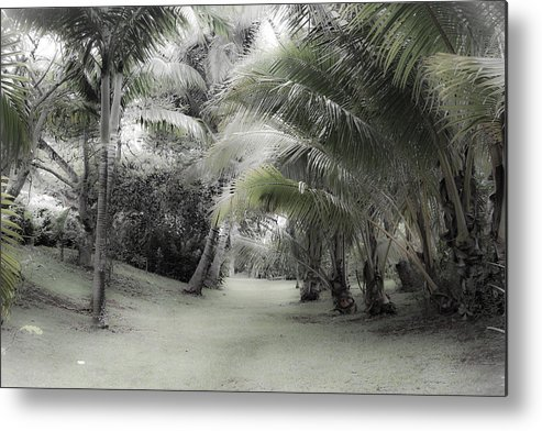 Old Metal Print featuring the photograph Misty Hawaiian Garden by Roger Mullenhour