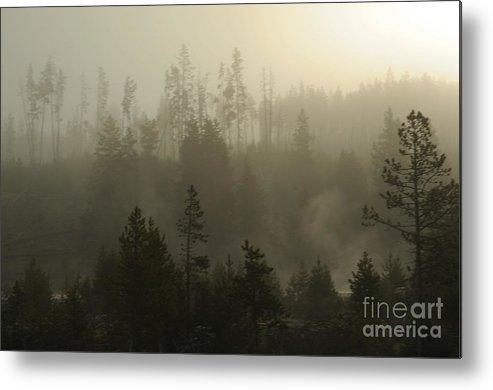 Fog Metal Print featuring the photograph Misty Morning by Dennis Hammer