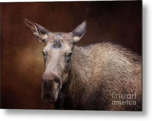 Moose Metal Print featuring the photograph Moose Portrait by Eva Lechner