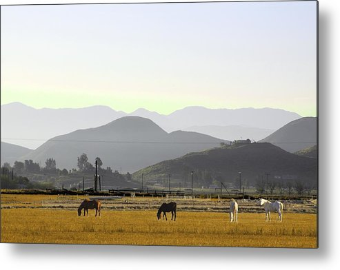 Morning In Country Metal Print featuring the photograph Morning In Country by Viktor Savchenko