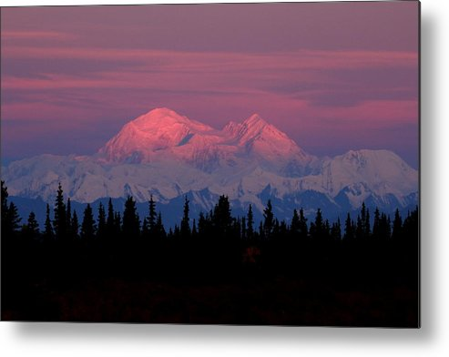 Denali Metal Print featuring the photograph Morning Light On Denali by Steve Wolfe