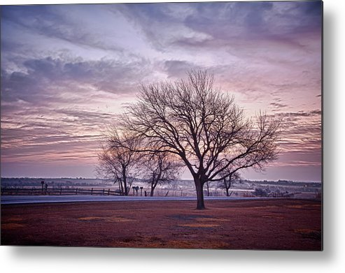 2010 Metal Print featuring the photograph Morning Tree by Peter Shugart