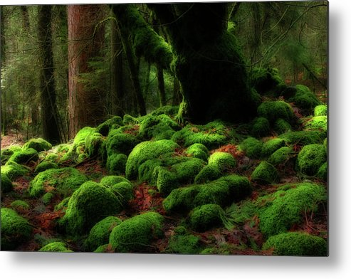 California Metal Print featuring the photograph Moss Covered Rocks And Tree Yosemite Np California by Robert Dayton