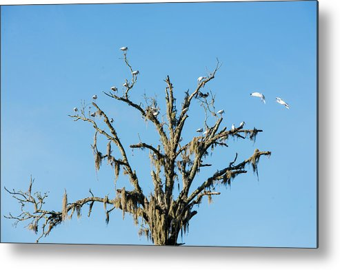 Birds Metal Print featuring the photograph Mossy Landing by Valerie Cason
