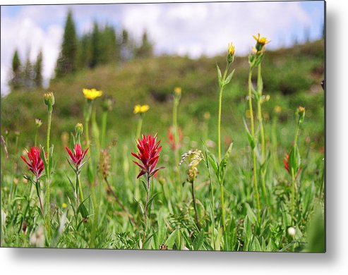 Landscape Metal Print featuring the photograph Mountain Meadow Abstract by Angela Patterson