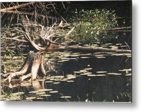 Lake Metal Print featuring the photograph Mud Lake Landscape - Photograph by Jackie Mueller-Jones