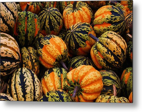 Squash Metal Print featuring the photograph Multi Colored Acorns by Jame Hayes