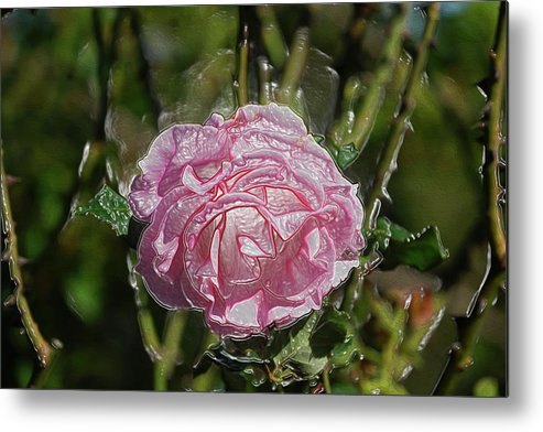 Art Metal Print featuring the photograph Must Have Been The Roses by Ryan Fox