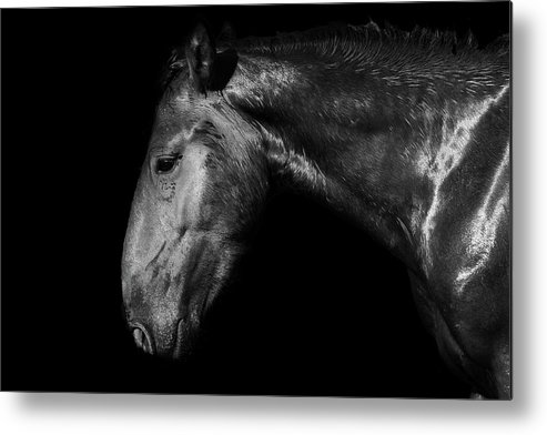 Horse Metal Print featuring the photograph Mustang Power by Michael Osborne