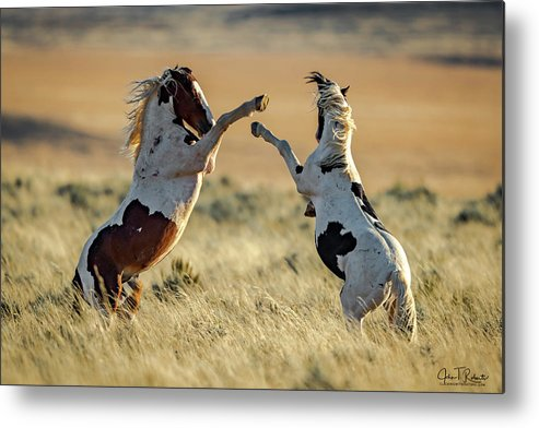 Wild Metal Print featuring the photograph Mustang Rivalry by Clicking With Nature