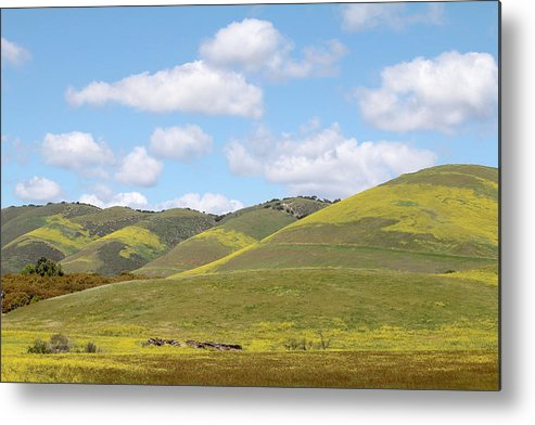 Nipomo Metal Print featuring the photograph Mustard On Nipomo Hills by Art Block Collections