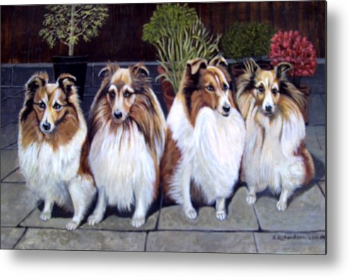 Shelties Metal Print featuring the painting My Golden Girls by James Richardson
