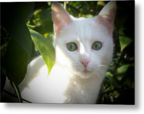 White Cat Metal Print featuring the photograph My Lil Girl by Roxanna Finch