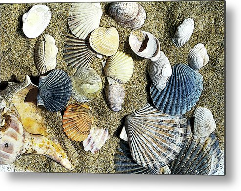 Coast Metal Print featuring the photograph Nantucket Shells by Joanne Riske
