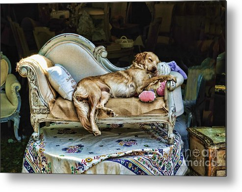 Dog Metal Print featuring the photograph Nap Time by Edward Sobuta