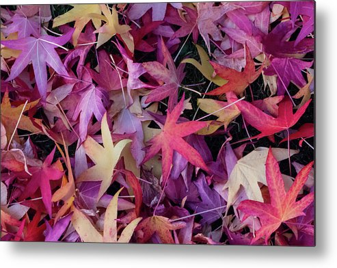 Leaf Metal Print featuring the photograph Nature's Confetti by Brigitte Mueller