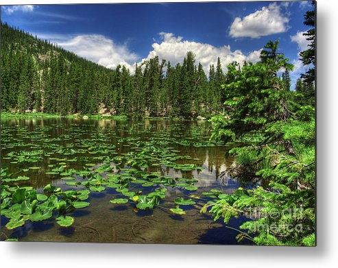 Landscape Metal Print featuring the photograph Nymph Lake by Pete Hellmann