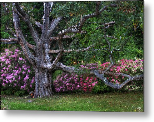 Oak Metal Print featuring the photograph Oak And Rhodies Through Glass by Wayne King