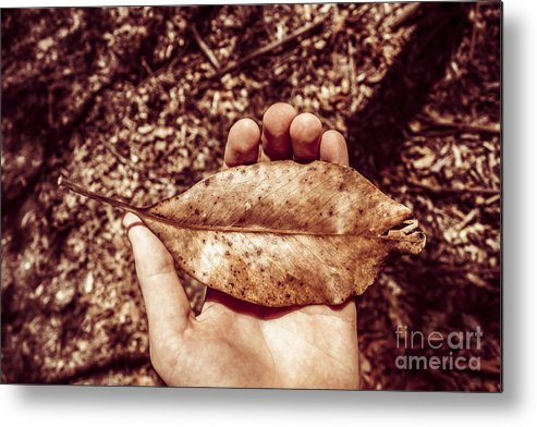 Brown Metal Print featuring the photograph Observation In Human Nature by Jorgo Photography - Wall Art Gallery