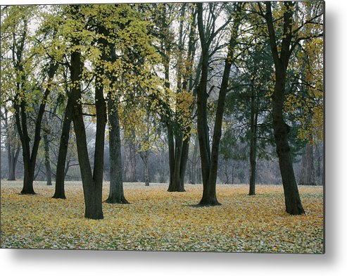 Palouse Metal Print featuring the photograph October In Palouse City Park by Jerry McCollum