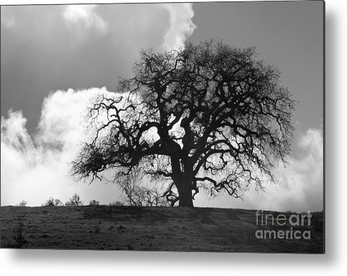 Oak Tree Metal Print featuring the photograph Old Oak Against Cloudy Sky by Sharon Foelz
