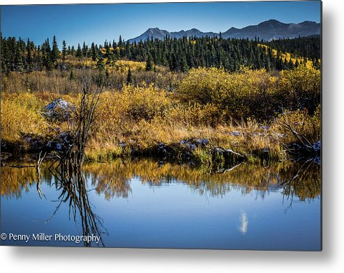 Metal Print featuring the photograph On Golden Pond by Penny Miller