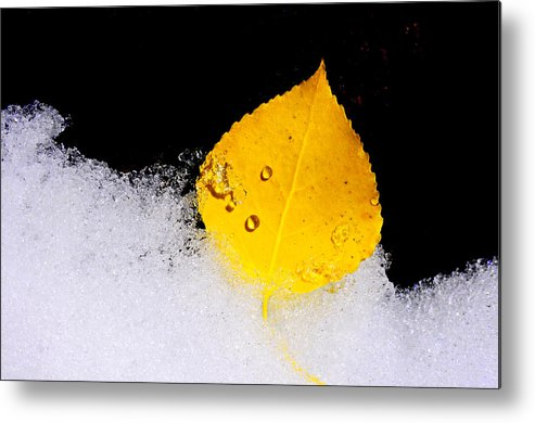 Icy Metal Print featuring the photograph On Ice by The Forests Edge Photography - Diane Sandoval
