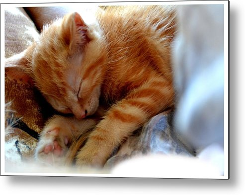 Kitten Metal Print featuring the photograph Orange Kitten Sleeping In Silk And Satin by Reva Steenbergen