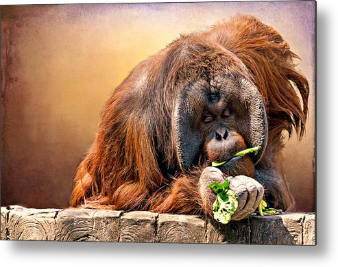Animal Metal Print featuring the photograph Orangutan by Maria Coulson